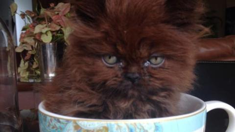 Sie adoptiert ein verwaistes Kätzchen. Ein Jahr später ist es nicht wiederzuerkennen