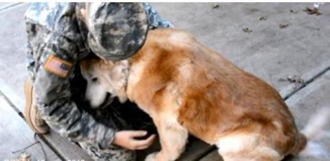 Als sie nach Hause kommt, rührt ihr Hund sie zu Tränen