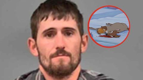 Wilderer: Er hat hunderte Rehe illegal getötet. Seine Strafe hat es in sich
