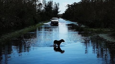 Er hat seinen Hund während der Naturkatastrophe ausgesetzt. Nun bekommt er die Folgen zu spüren