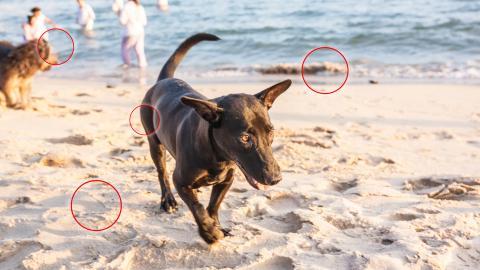 Urlaub am Meer: Vor diesen am Strand lauernden Gefahren solltest Du Deinen Vierbeiner schützen!