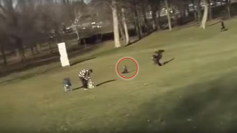 Ein Steinadler stürzt sich auf ein Kind und hebt es in die Luft