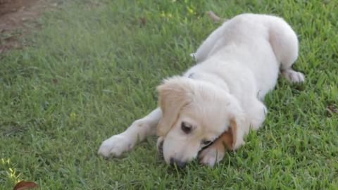 Nachgewiesen: Diese Krankheiten haben Hundebesitzer nicht