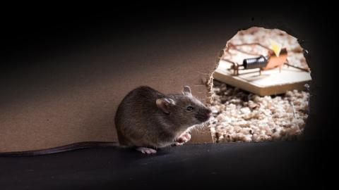 Sie ist frustriert, dass Ratten immer als Schädlinge abgestempelt werden. Da hat sie eine richtig geniale Idee, um das Gegenteil zu beweisen!