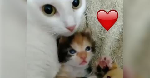 Die Mama hat ein ganz besonderes Auge auf ihr Kleines. Wie sie kuscheln ist herzallerliebst!