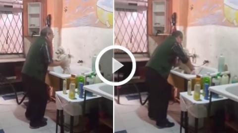 Hundefrisör tanzt mit Hund und kümmert sich sehr liebevoll um ihn!