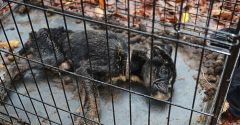 Tierquälerei: Ihre Besitzer liessen diese kleine Hündin in einem engen Käfig aushungern