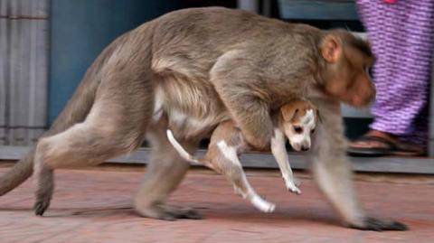 Affe findet hilflosen Welpen: Was dann passiert, ist unglaublich