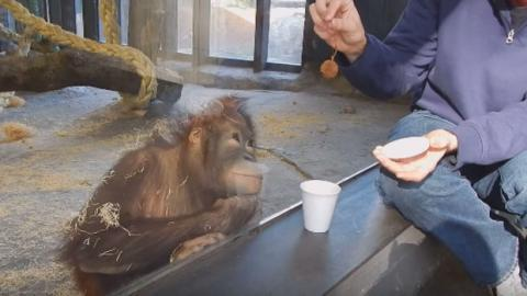 Ein Affe schaut sich einen Zaubertrick an