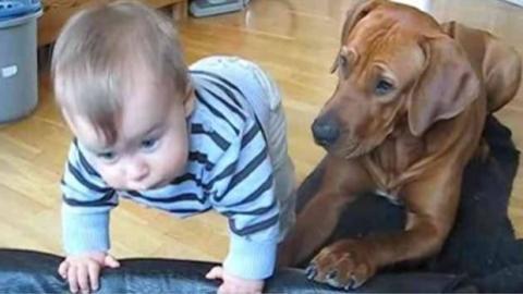 Das Baby will ins Hundebett, doch der Vierbeiner reagiert blitzschnell