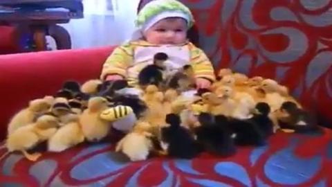 Ein Baby und eine Schar kleiner Entchen