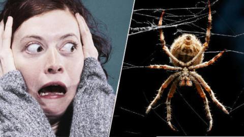 Wie Sie Ihre Angst vor Spinnen in nur zwei Minuten loswerden.