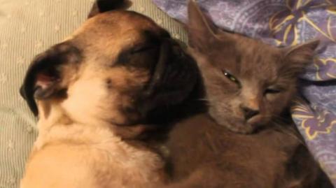 Dieser Hund schnarcht gelassen und entspannt an eine Katze gekuschelt.