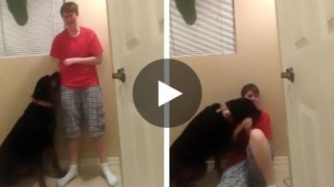Dieser Hund beruhigt sein Frauchen, das am Asperger-Syndrom leidet.