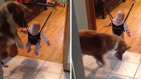 Dieses Baby schafft es nicht zu springen. Sein Hund hilft ihm auf seine eigene Art.