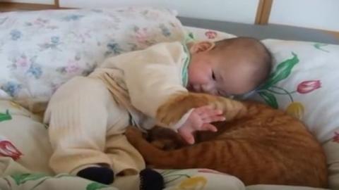 Katze und Kind: Sie zeigen sich ihre Zuneigung auf ganz besondere Weise