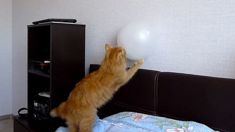 Eine Katze spielt mit einem Ballon. Aber es läuft nicht ganz so wie geplant.