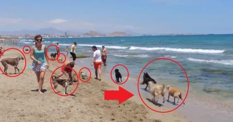 In Barcelona gibt es jetzt einen Strand für Vierbeiner