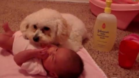 Dieser Pudel ist bereit, das Baby vor einem ihm nicht geheueren Gerät zu schützen
