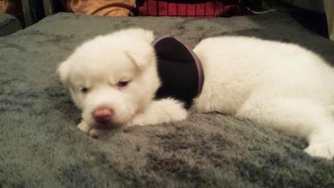 Schwimmer-Syndrom bei Hunden: Casper kann nicht aufstehen