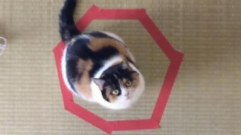 Wenn man einen Kreis auf dem Boden zieht, reagiert eine Katze immer auf die gleiche Weise. Ein Experiment zum Nachmachen!