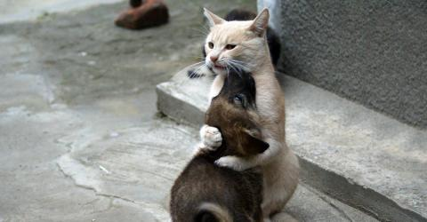 Diese Katze kann ihre Gefühle nicht zurückhalten, als ihr verlorener Hundefreund nach 10 Tagen wieder auftaucht