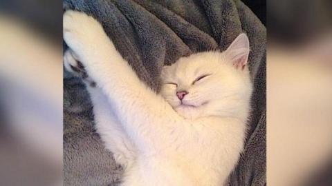 Kennt Ihr schon Coby? Coby hat ein Instagram-Account und gilt als die schönste Katze der Welt!