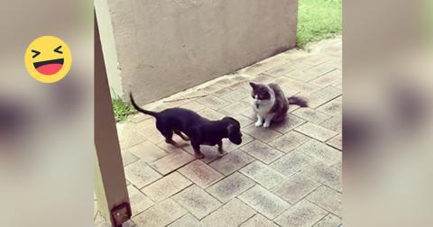 Der Dackel möchte mit der Katze spielen. Doch was die gleich macht, wird euch zum Lachen bringen!