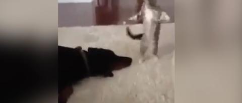 Dieses Kätzchen will den Hund um alles in der Welt nicht in Ruhe schlafen lassen