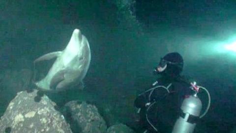 Ein Delfin nähert sich einigen Tauchern an - aus einem unerwarteten Grund.