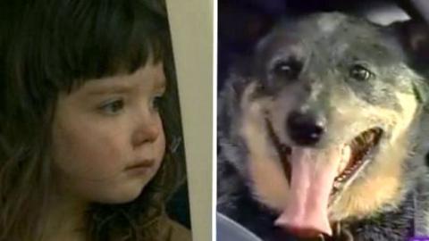 Ein Hund rettet ein kleines Mädchen, das sich im Wald verlaufen hat.