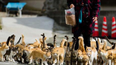 Auf dieser Insel Japans leben Menschen und Katzen harmonisch zusammen.