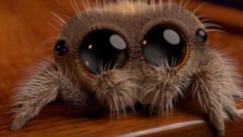 Hast du Angst vor Spinnen? Dann solltest du diese Farbe unbedingt meiden!