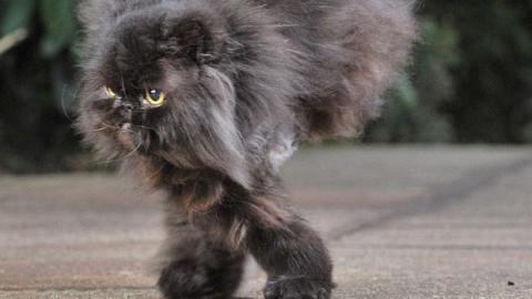 Die Geschichte dieser Katze auf zwei Beinen ist unglaublich.