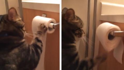 Diese Katze hat einen Technik gefunden, um nie geschimpft zu werden. Entdecken Sie, wie sie das macht.