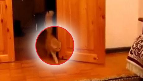 Diese Katze mag ein bestimmtes Geräusch nicht. Ihre Reaktion ist super witzig.