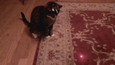 Er täuscht seine Katze, indem er einen Laser auf ihren Kopf setzt. Das ist ein urkomisches Video.