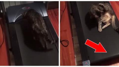 Diese Katze will sich unbedingt auf dem Laufband ausruhen! Einfach herrlich!