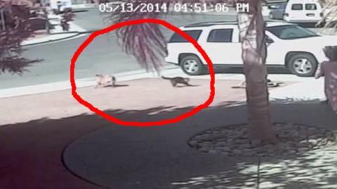 Dieser Hund war von seiner Familie gerettet worden. Er hat es ihr zurück gezahlt, indem er das Leben ihrer Katze gerettet hat.