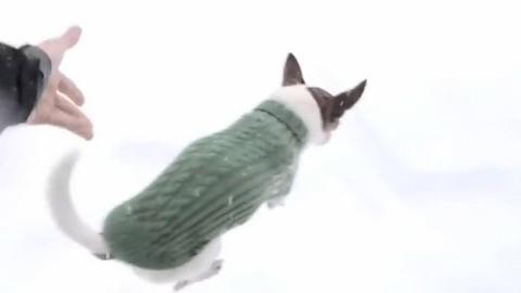 Dieser Mann lässt seinen Hund im Schnee laufen. Aber das hat er nicht erwartet.