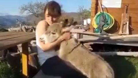 Das anhänglichste Eselchen der Welt