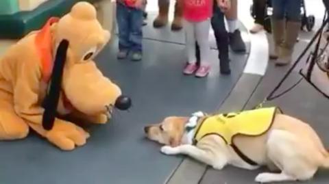 Hund dreht durch, als er im Disneyland Pluto entdeckt