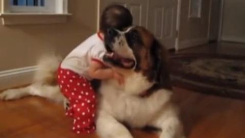 Ein kleines Mädchen und der Hund seiner Großeltern sind hier ein Herz und eine Seele