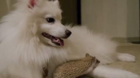 Ein Hund und ein Igel begegnen sich... und sind gleich beste Freunde