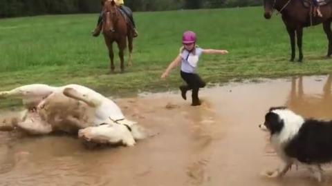 Dieses Poney beschließt ganz plötzlich, ein Bad zu nehmen. Eine nasse Überraschung für seine kleine Reiterin!