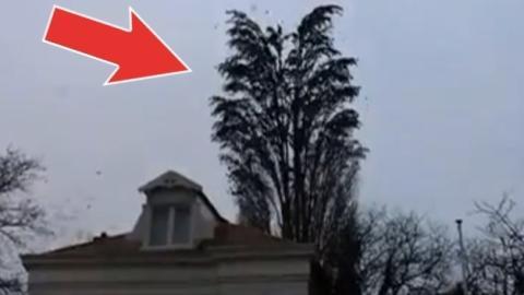 Eine Frau filmt einen Baum... Da geschieht etwas Unglaubliches!