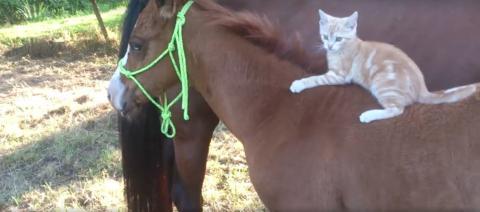 Ein mutiges kleines Kätzchen lernt reiten