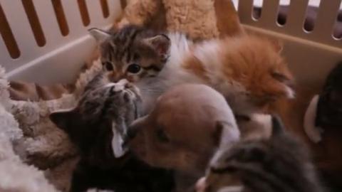 Ein verwaister kleiner Hundewelpe wird von einer Katzenmutter adoptiert und aufgezogen