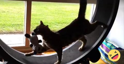wer nimmt katzen auf