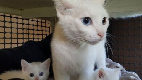 Eine Katze mit verschiedenfarbigen Augen und zwei junge Kätzchen wurden mitleidslos ausgesetzt